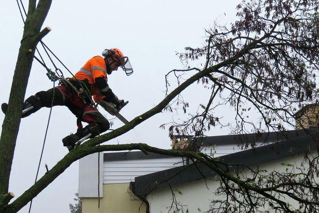 Pilarz-drwal, Arborysta wycinka i pielęgnacja drzew, usługi wywrotką