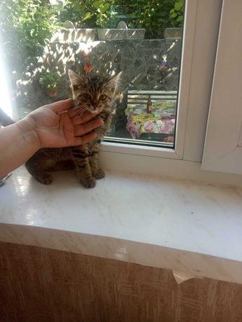 Нашелся котенок,чей потеряшка?