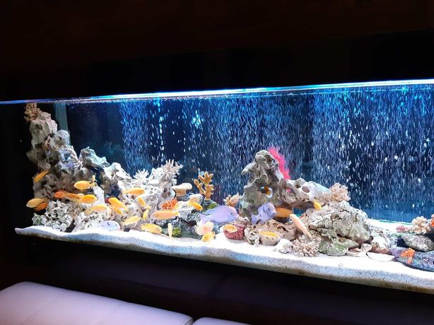Услуги по запуску и обслуживанию аквариумов , Аквариумист