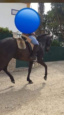 Para venda égua preta