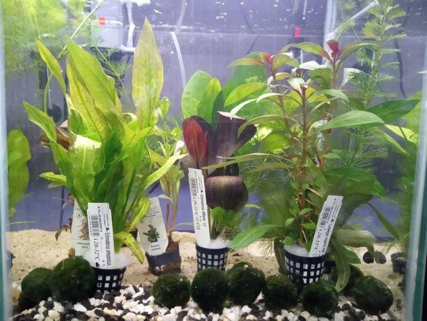 Sprzedam rybki  roślinki sklep zoologiczny konik polny