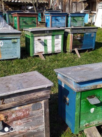 Продам вулик з бджолами «Українка»