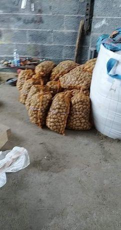 Sadzeniaki   ziemniaki kaliber  3-5