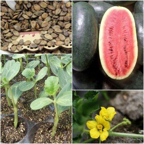 20 szt nasion arbuza Black Diamond odm wczesna nasiona arbuzów uprawa