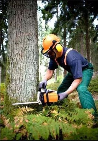 СПИЛ деревьев, валка, ДРОБЛЕНИЕ, расчистка территории, АВАРИЙНЫХ