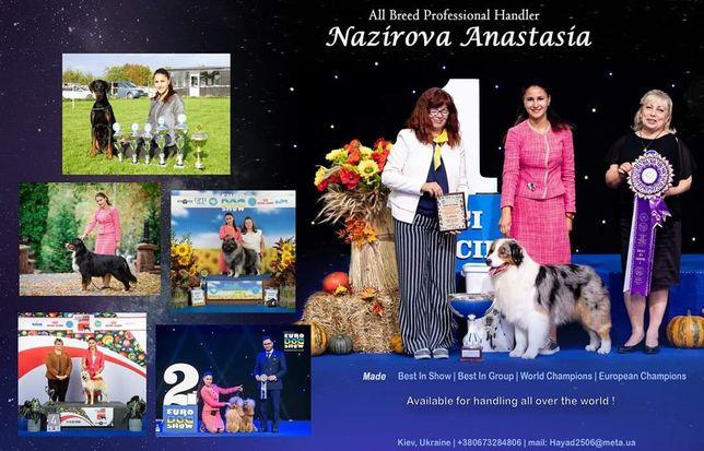 Хендлер / Хендлинг/показ собак на выставках, Киев