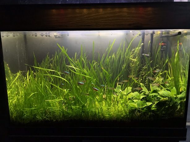 Продам укомплектованный аквариум!с тумбой, рыбками и растениями