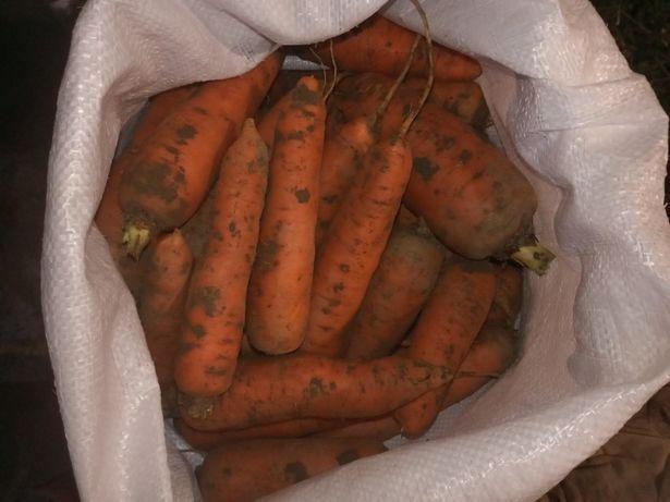 Продам моркву (1 сорт)