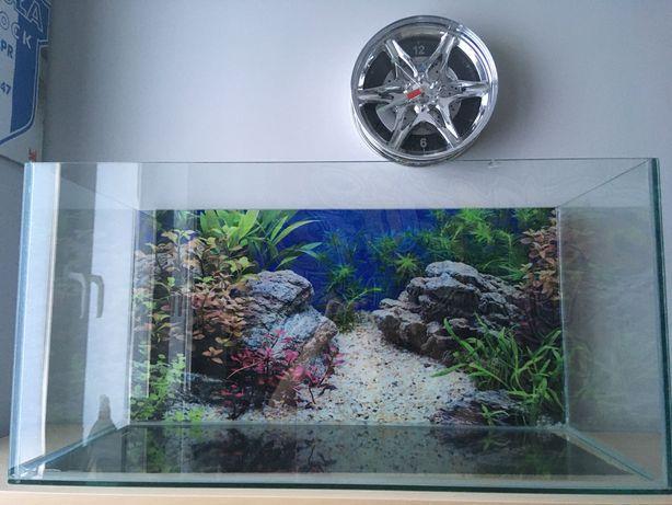 Akwarium Terrarium