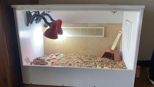 Продам сухопутную среднеазиатскую черепаху с террариумом