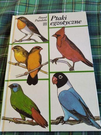 Ptaki egzotyczne Paweł Pogodała