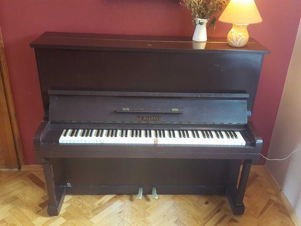 Pianino Calisia lubelskie
