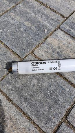 ŚWIETLÓWKA OSRAM L36W/840 LUMILUX Cool White - 100szt - zapraszam