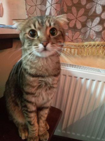 Котик шукає Кішечку