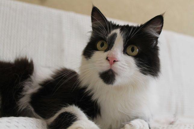 Кошечка Пушинка, 4 года, ищет семью