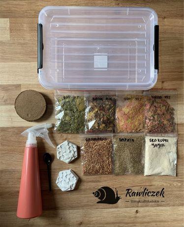 Jedzenie dla ślimaka, pojemnik box, zestaw, achatina,ślimak afrykański