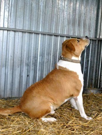 Dom dla TTB pies wykastrowany samiec czytaj opis daj szansę