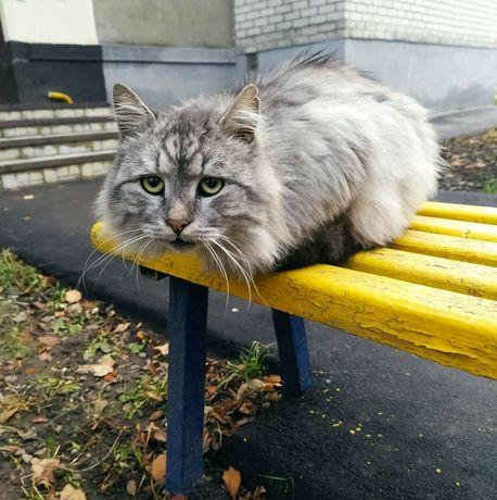 Котик ждёт свою семью!