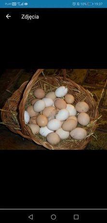 Jajka wiejskie z wolnego wybiegu dobra cena dowóz gratis