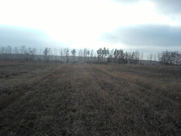 Земельна ділянка 0,30 га в с. Гамарня Малинський р-н Житомирська обл.