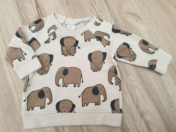 Bluza h&m r.68 w słonie