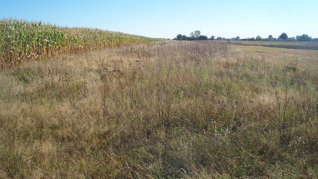 Dzierżawa pola, grunt rolny