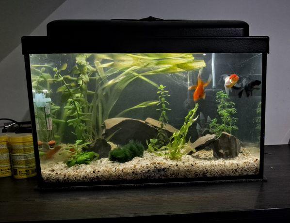 Zestaw 25l prosty LED 1W akwarium na rybki plus zamek