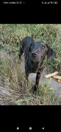 Пропала замечена собака Заводской