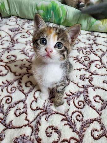 Котята ищут семью котенок кот срочно ищут дом