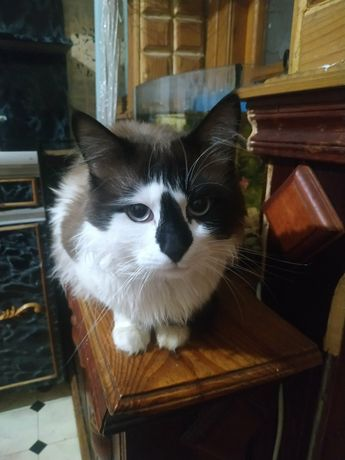 Срочно кот ищет дом