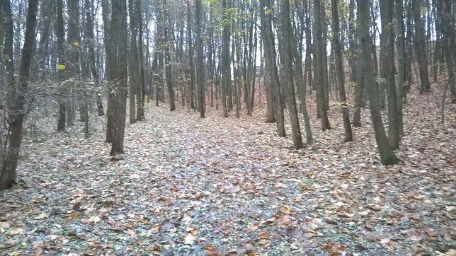 wycinka drzew za drewno ( za darmo ) wywóz drewna wycinanie cięcie