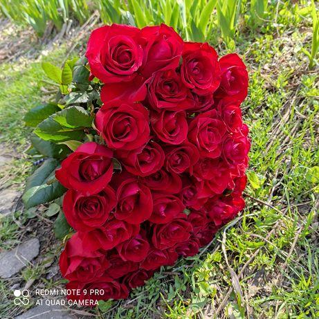 Роза красная! Цветы Днепр! Доставка цветов!