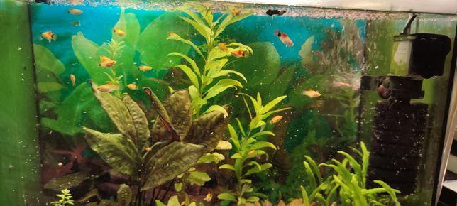 Яванский мох, рыбки , водоросли.