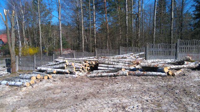 Drewno brzoza + sosna modrzew - drzewo ścięte z działki budow. w lesie