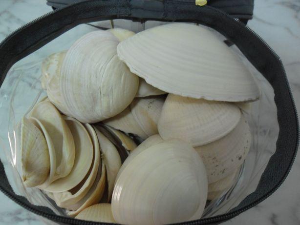 Bolsa cheia de Conchas grandes mar portugues
