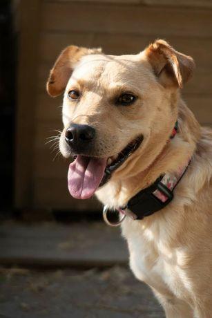 Leon piękny psiak czeka na domek
