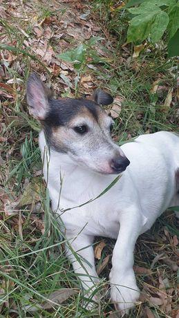 Найдена собака. Павлово Поле