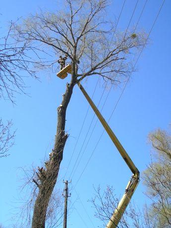 Зрізання,зрізка дерев зрізати дереваСрезать обрезка обрізка спил валка