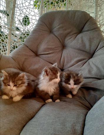 Маленькі кошенята