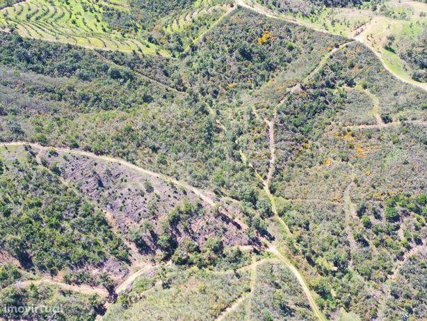 Terreno Rústico, Sabóia