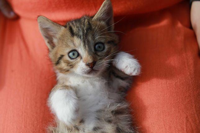 котенок кошечка бесплатно киев