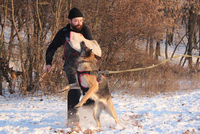 Кинолог, дрессировка по защите (спортивная, прикладная), Полтава