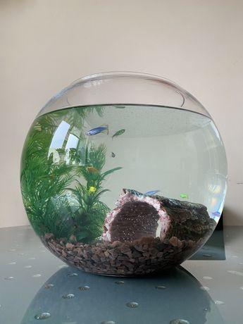 Акваріум з рибками