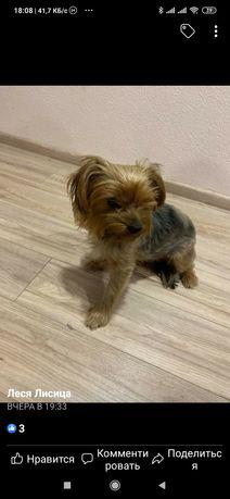 Пропала найдена собака за с. Люцерна
