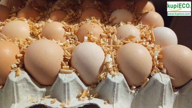 Инкубационное яйцо бройлера ROSS-708 ( Чехия )