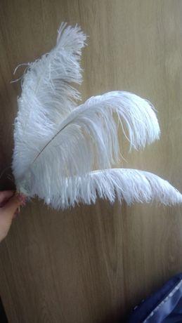 Strusie pióra kolor/ białe