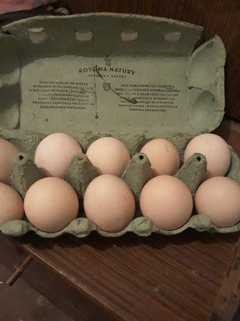 Jajka kurze swojskie
