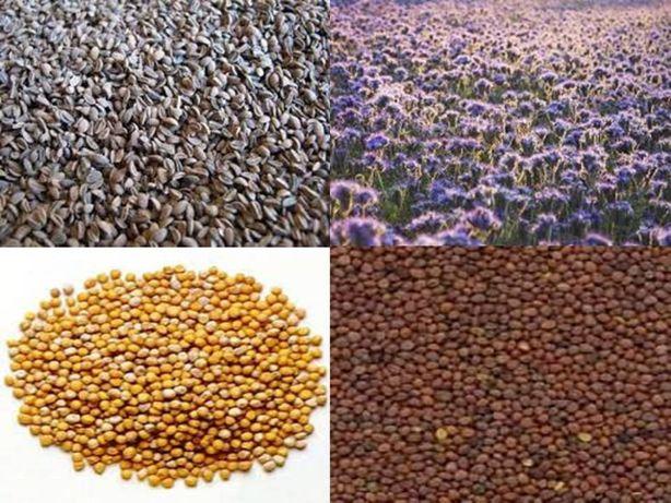Gorczyca biała, Poplonowa, łubin żółty, słonecznik , facelia, wyka