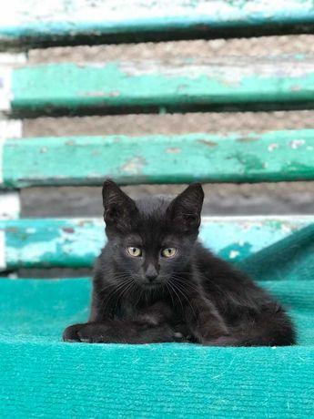Отдам в хорошее руки котят (кошка, кот)