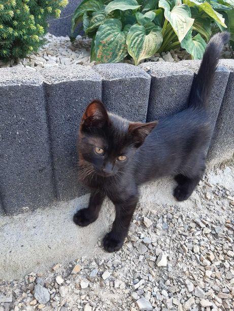 Czarna kotka szuka domu